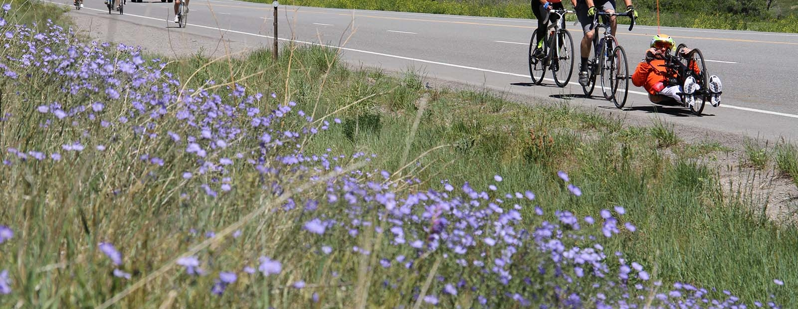 A participant rides on the road in Ride the Rockies